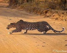 Beautiful Creatures, Animals Beautiful, African Cats, Panthera Pardus, Cat 2, Wild Nature, Big Sky, Animal Jewelry, Big Cats