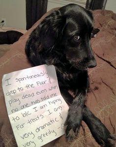 smartgirlsattheparty: mindyluna: this is the greatest dog shame I've seen Dog shame.