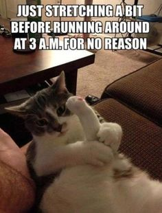Funny cat pictures: just stretching a bit. Funny Animal Pictures posted every day ! Funny Animal site brings daily updates of funny dogs and cats, pics and videos. Funny Shit, Funny Cat Memes, Funny Cute, The Funny, Funny Humor, Funny Captions, Farts Funny, Funny Stuff, Pet Memes