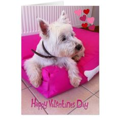 Happy Valentine's Day Westie Card - tap, personalize, buy right now!