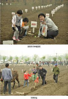 北京蟹岛农耕园举办农耕文化节,让游客有机会体验耕田、种植蔬菜、除草等。 Beijing Xiedao Farming Garden held farming cultural festival, let visitors have a chance to experience ploughing, planting vegetables, weeding, etc.