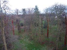 Kew Gardens Londres - Treetop Walkway