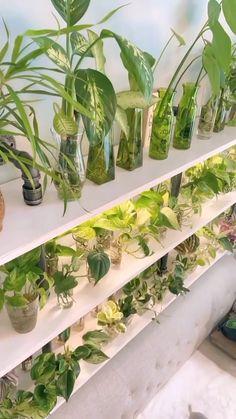 Inside Plants, Room With Plants, House Plants Decor, Plant Decor, Indoor Water Garden, Garden Plants, Indoor Plants, Plant Aesthetic, House Plant Care