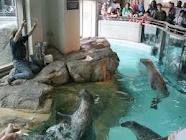 maritime aquarium in norwalk ct more stay cation week public aquariums ...