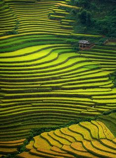 See the rice terraces of Mu Cang Chai in Vietnam. This area is most beautiful in late September - early October when the rice is ripening.