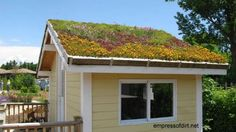 Shed with living roof including succulents