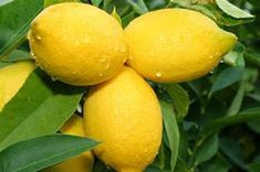 """Secret Health Remedies Theresa Cheung, author of """"The Lemon Juice Diet,"""" shares 15 health conditions, from acne to anxiety and the flu, that can be helped through the healing benefits of lemons. Health Remedies, Home Remedies, Natural Remedies, Health And Beauty, Health And Wellness, Health Tips, Health Fitness, Health Facts, Lemon Juice Diet"""