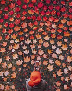 Image shared by ֆօռɢɮɨʀɖ . Find images and videos about autumn f - Shared Hosting - Image shared by ֆօռɢɮɨʀɖ . Find images and videos about autumn fall and leaves on We Heart It the app to get lost in what you love. Fall Pictures, Fall Photos, Fall Pics, Autumn Photography, Creative Photography, Autumn Aesthetic Photography, Autumn Aesthetic Tumblr, Poses Photo, Autumn Cozy