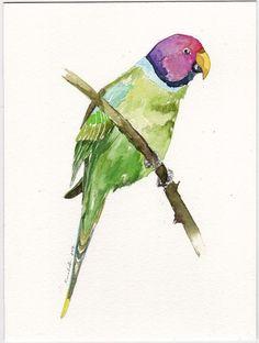 "Start bid $6.50 USD. on #ebay ""Plum Headed Parakeet Parrot"" #art #Watercolor #painting #fineArt #Parrot #bird #Illustration #IllustrationArt #Handmade #Gift #Collectible #impressionism #Lovely #cute #cutebird #artforsale"