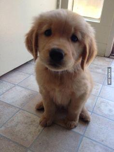 No fetch today? :'(