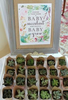 Take home a baby succulent baby shower favors! 2019 Take home a baby succulent baby shower favors! The post Take home a baby succulent baby shower favors! 2019 appeared first on Baby Shower Diy. Boho Baby Shower, Baby Shower Floral, Bebe Shower, Fiesta Baby Shower, Gender Neutral Baby Shower, Baby Shower Parties, Baby Shower Twins, Baby Shower Party Favors, Baby Shower Souvenirs