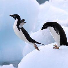 #fly #penguin
