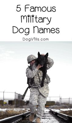 Looking for famous military dog names for your furry new patriotic pal? Check out 5 of our favorites, plus the meaning behind them!