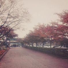 가을이 담기는 거리