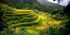 China Rice Terraces Guangxi - HD Travel photos and wallpapers Baguio Philippines, Visit Philippines, Philippines Travel, Urumqi, Reiki, Dunhuang, Cool Places To Visit, Places To Travel, Baguio City