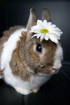 Glamour shot - little bunny