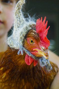 i'm drawing a line and i'm drawing it right here: no knit chicken hats. for the sake of the chickens as much as anything else. (How did they get the hat on that chicken? Farm Animals, Funny Animals, Cute Animals, Animal Funnies, Chicken Hats, Chicken Coops, Funny Chicken, Chicken Clothes, Chicken Humor