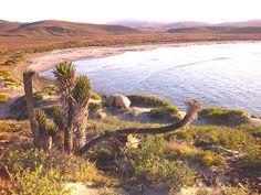 Valle de Los Cirios, Baja California, Mexico.