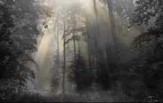 photoshop, природа, лес