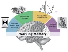 """this is excellent!! visual depiction of working memory..... ....Follow for Free """"too-neat-not-to-keep"""" teaching tools & other fun stuff :)"""