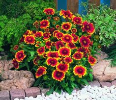 Nega muškatle  Gardens mediteraneo  Pinterest  Plant care, Houseplants and...