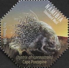 Cape Porcupine (Hystrix africaeaustralis)