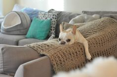 My AMAZING French Bulldog! Her name is Charlie.