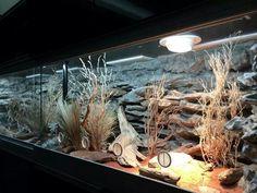 Pana Stachtidis, Germany Rock Background, Reptile Enclosure, Vivarium, Geckos, Terrarium, Habitats, Germany, Fish Tanks, Nice
