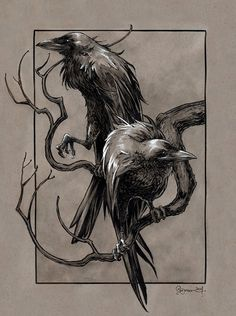 Great Odin's Ravens!