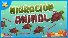 ¿Por qué Migran los Animales? | Videos Educativos para Niños