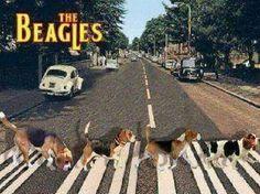 ☮ American Hippie ☮ The Beagles