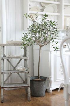 VIBEKE DESIGN- ladder (olive tree on deck though)