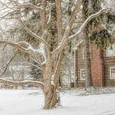 Long White Gloves. #kkgroupies #pin #ohio #myoh #ohphotography #winter #winterinohio #snow #ohioexplored #roamohio #akronohio #summitcounty #simplepleasures #simplejoys #simplelife #cvnp #cuyahogavalleynationalpark