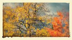 Autumn sky