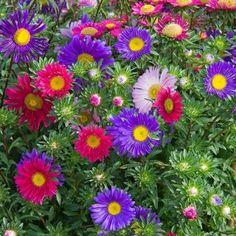 backyard design – Gardening Tips Growing Grapes, Growing Plants, How Beautiful, Beautiful Flowers, Beth Chatto, White Flower Farm, Hydrangea Paniculata, Aquaponics Plants, Moon Garden