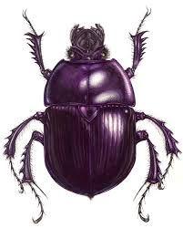 Image result for dor beetle