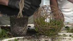 Kokedamas – Mis Jardines Planters, Diy, Garden, Outdoor, Style, Gardening, Garden Water Fountains, Plants Indoor, Flowering Plants