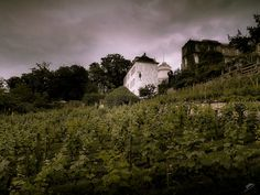 Paris' Only Vineyard | Flickr - Photo Sharing!