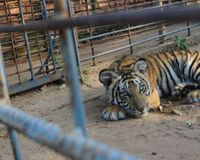 Last Chance to Help Tony the Tiger!