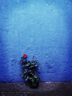Solitary flowers in the utterly gorgeous Santa Catalina convent in Arequipa, Peru.