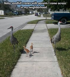 Just taking the kids for a walk, thats all.