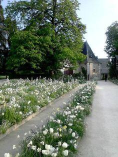 Spring white tulips at Domaine de Chaumont sur Loire