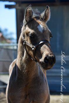 Bucky's Foals - RC Quarter Horses