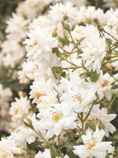 Argent Sterling 925 Tournesol Plante Pot Amour Jardinage Helianthus Charme Bijoux