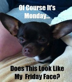 Of course it's Monday... Does this look like my Friday face?
