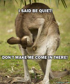 Funny Kangeroo photo