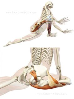 Protecting the knee in Pigeon Pose: Top illustrates engaging the muscles on the outside of the knee. Bottom shows the piriformis muscle stretching in Pigeon Pose.