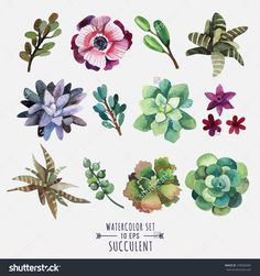 Vector Set Of Floral Elements In A Watercolor Style. Succulents Painted In Watercolor. Elements For Design Of Invitations, Movie Posters, Fabrics And Other Objects. Set #1 - 278560487 : Shutterstock