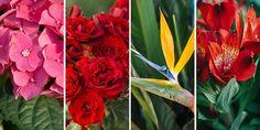 🌷🌼🌿🌺 Επιλέγουμε τα πιο όμορφα λουλούδια για βάζο που μας χαρίζουν έντονα χρώματα και υπέροχα άρωματα, γεμίζοντας το σπίτι με χαρά και αισιοδοξία όλο τον χρόνο.