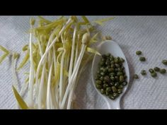 Khang Starr — How to Grow Mung Bean Sprouts - Cheap Easy Method Growing Broccoli, Growing Peas, Bean Sprouts Growing, How To Make Beans, Growing Wheat Grass, Sprouting Seeds, Alfalfa Sprouts, Pork Buns, Mung Bean